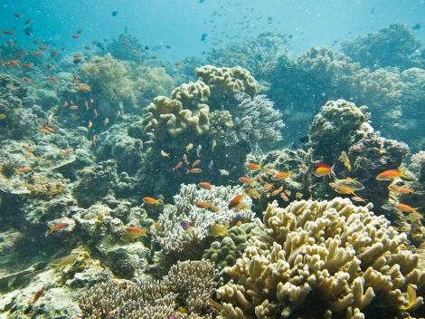 Inmersión en Sipadan, Malasia
