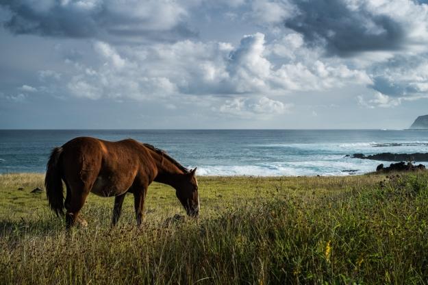 Isla de Pascua caballo