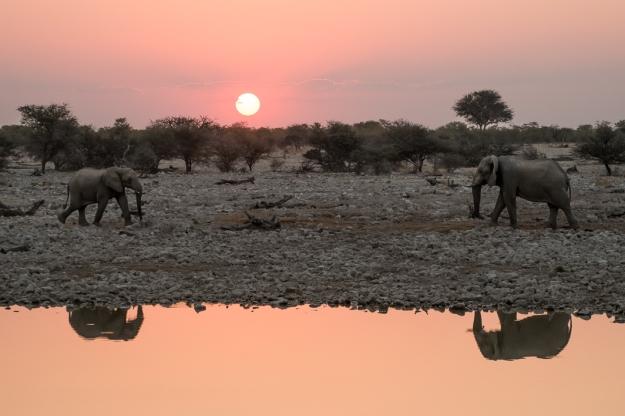 Waterhole elephant
