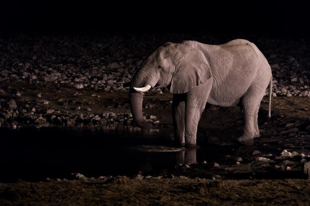 Elefante Okaukuejo