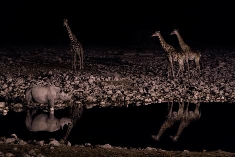 Rinoceronte y jirafas