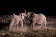 Elefantes Etosha