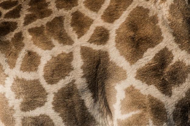 Piel jirafa