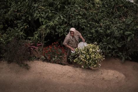 Plantación café