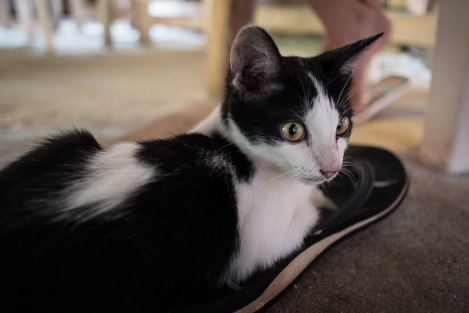 Gato en Railay