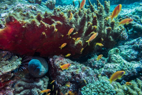 Inmersión en Pulau Weh