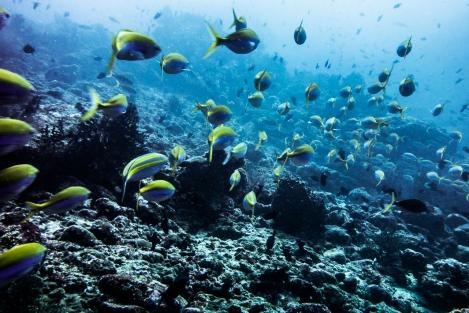 Buceo en Pulau Weh
