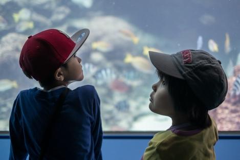 Niños en el Okinawa Churaumi Aquarium