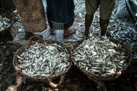 Capazos con pescado