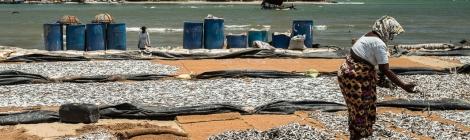 Secando pescado