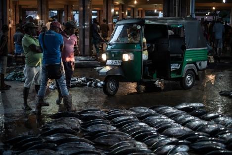 Mercado de pescado en Negombo