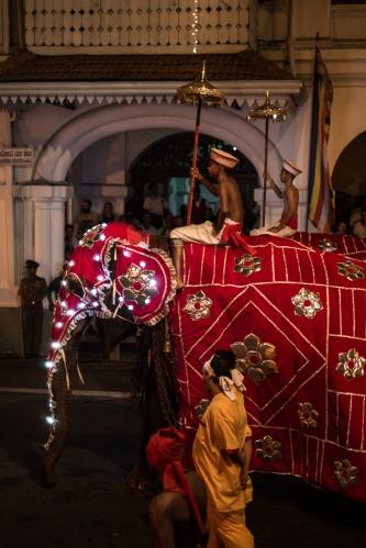 Elefantes en el Esala Perahera