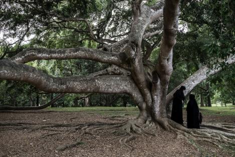 Jardín Botánico, Kandy, Sri Lanka