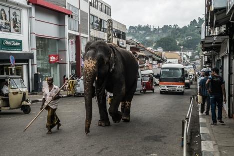 Elefante en las calle de Kandy