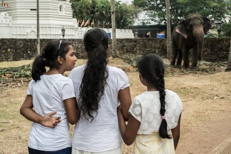 Niñas y elefante
