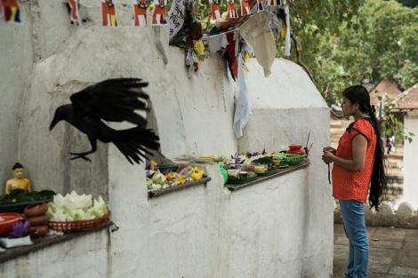 Cuervo en un templo, Kandy, Sri Lanka