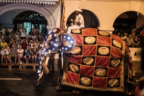 Elefante en el Esala Perahera