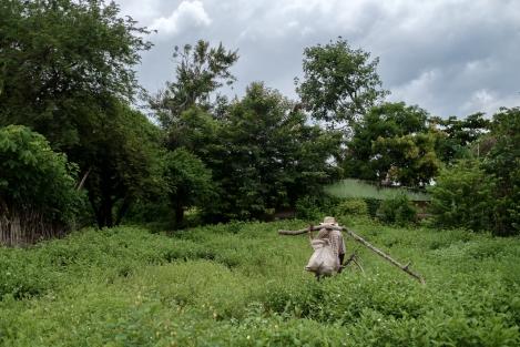 Campesino en Palenque