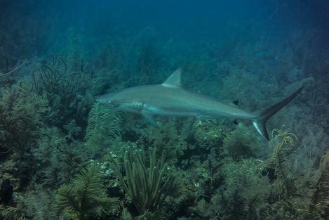 Tiburón en Providence