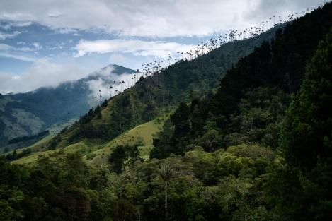 Vista del Valle de Cocora